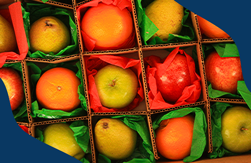 Fruit exports: check out some of the necessary documents!