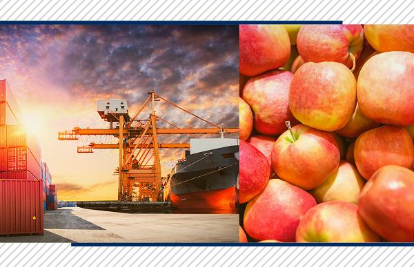 Exportação de maçã: confira insights do mercado e como realizá-la!